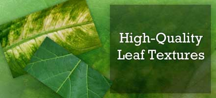 05-05_leaf_freebie_lead