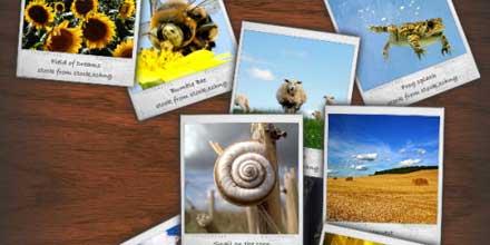 polaroid-photo-gallery01