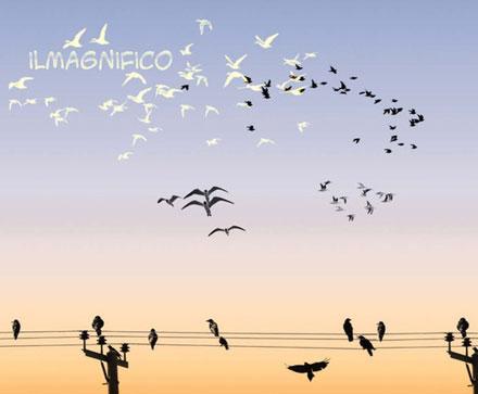 27581-Bird-Brushes