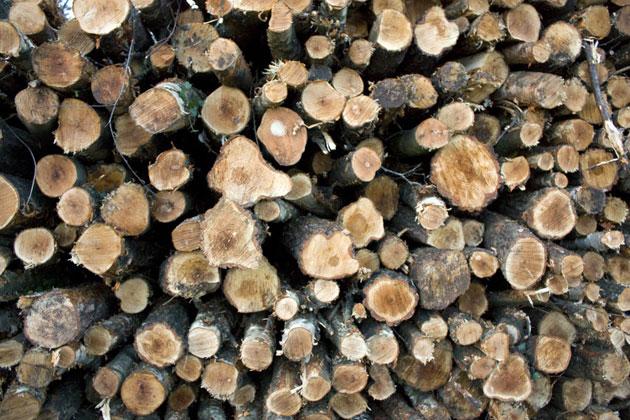 woodtex1