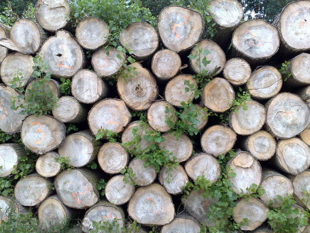 woodtex2