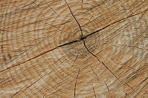 woodtex4