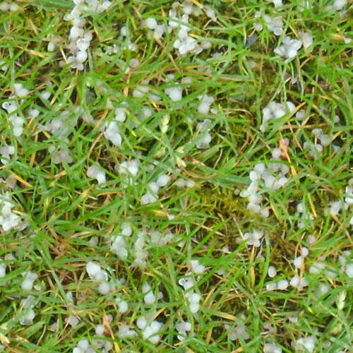 grass3