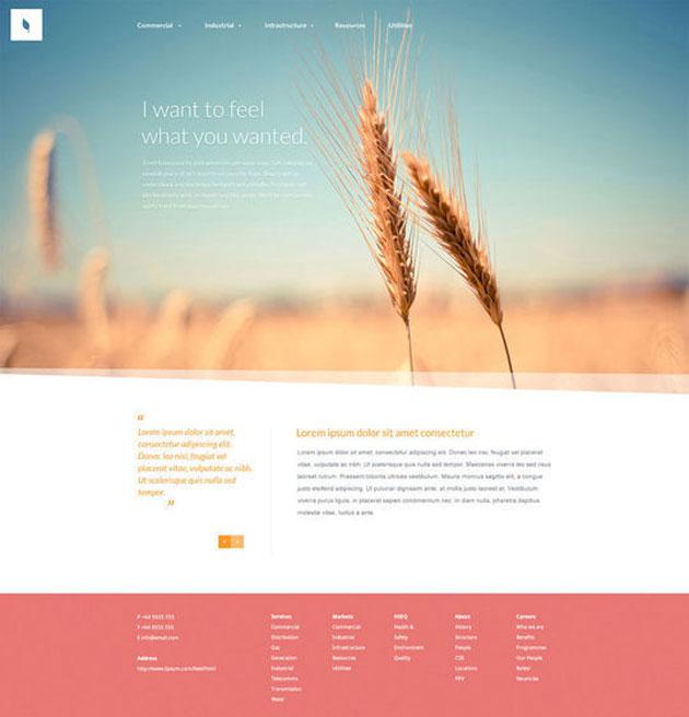 websitetemplate02