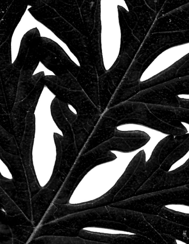 PhotoshopBrushes_leaf03