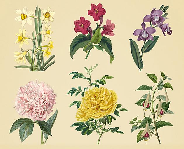 vintage-herbarium2